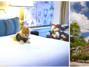 6 Reasons Your Pup Is Begging to Stay at The Alexandrian Hotel